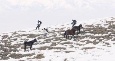 Goodbye Horses Rémy Barreyat
