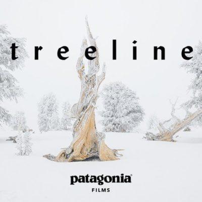 patagonia Treeline